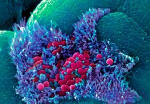 bacteria in human gut