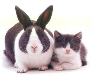 cloning results may vary